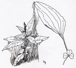 Central Park Plants